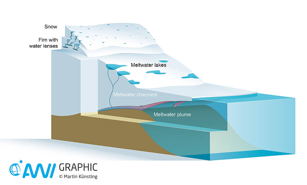 Infograph of a floating tongue glacier in summer.