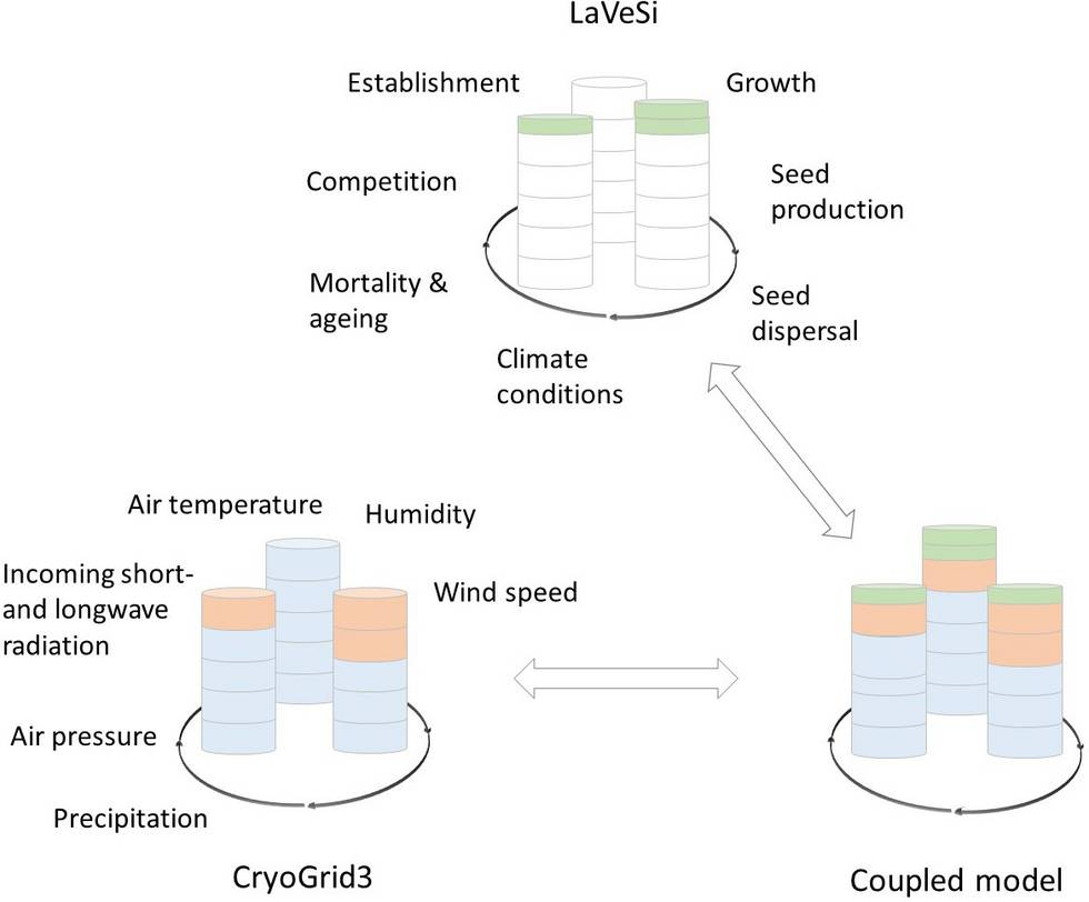 Sketch of the proposed model development. Top: LAVESI module adapted to the CryoGrid 3 structure with the respective variables used. Bottom left: CryoGrid 3 with its variables. Bottom right: Coupled model with the LAVESI vegetation layer as an added layer.