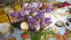 Bouquet of tundra flowers