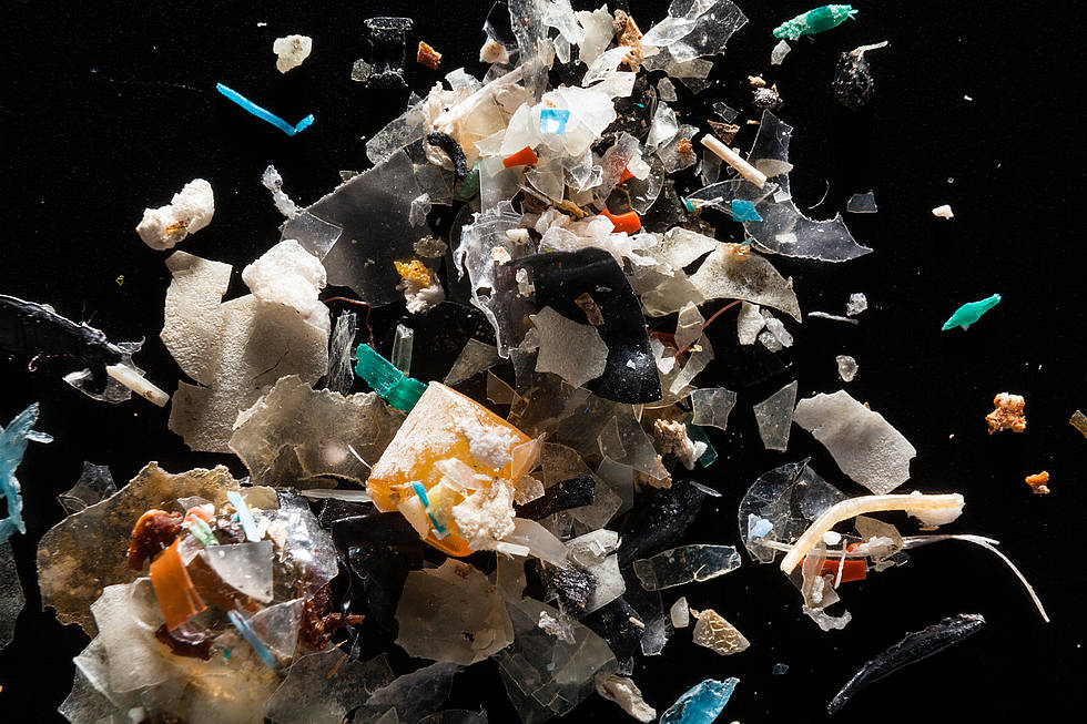 A colorful bunch: Microplastics from the Rhode River are pictured at the laboratory of Dr. Lance Yonkos in the Department of Environmental Science & Technology at the University of Maryland.