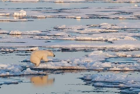 Perceiving Arctic Change: Climate, Society and Sustainability