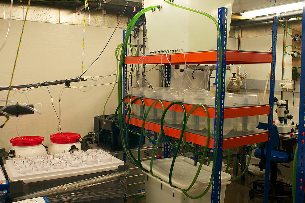 Incubation facility for cod eggs