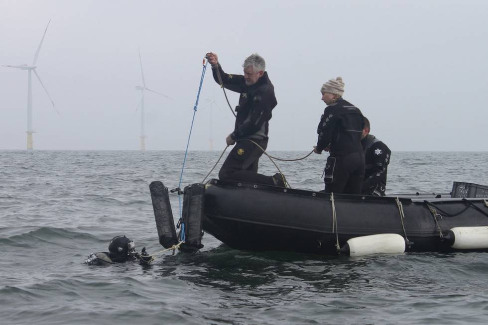 Deploying seed oysters in oyster baskets by AWI scientific divers.
