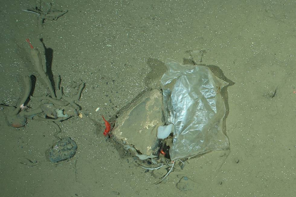 Plastic bag at the HAUSGARTEN, the deepsea observatory of the Alfred Wegener Institute in the Fram Strait. This image was taken by the OFOS camera system in a depth of 2500 m.