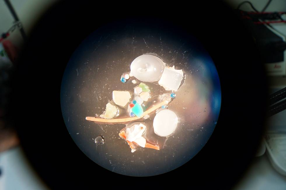 Differend types of microplastic particles under a microscope.