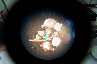 Different types of microplastic particles under a microscope.