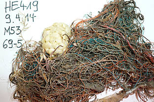 Plastic fibers and snail eggs